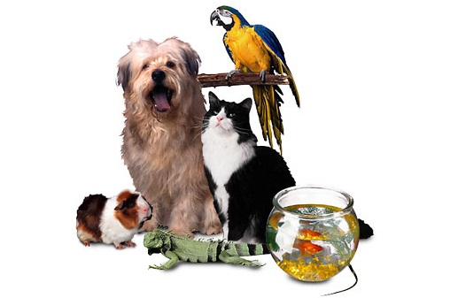 pet-business-ideas