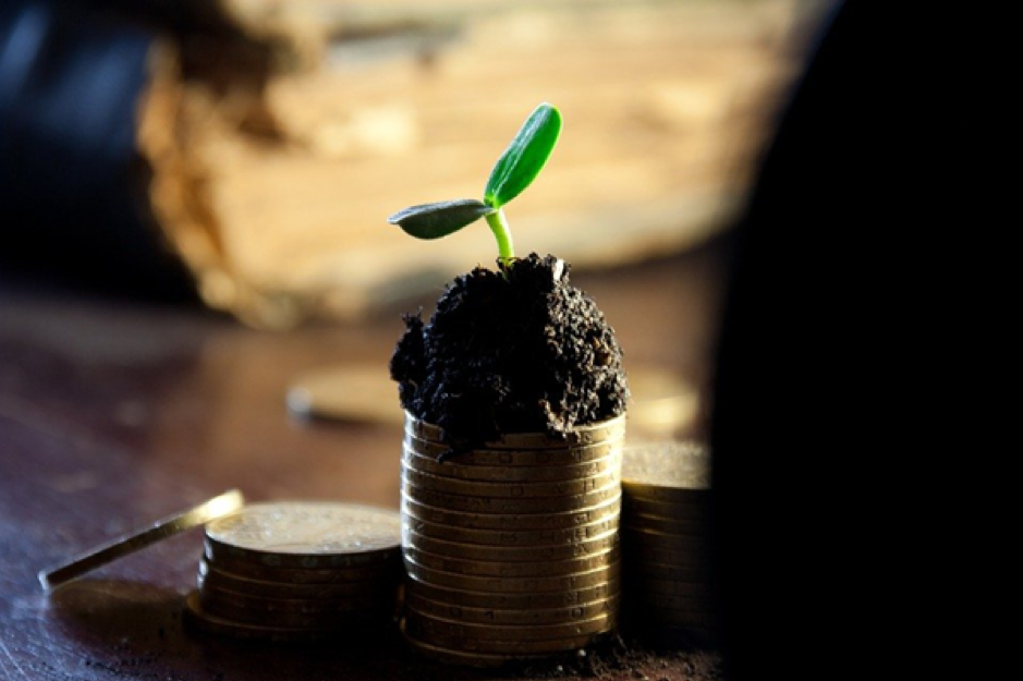 seedling on top of gold coins