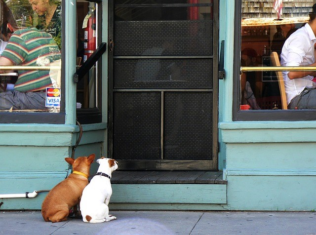 two dogs outside the restaurant